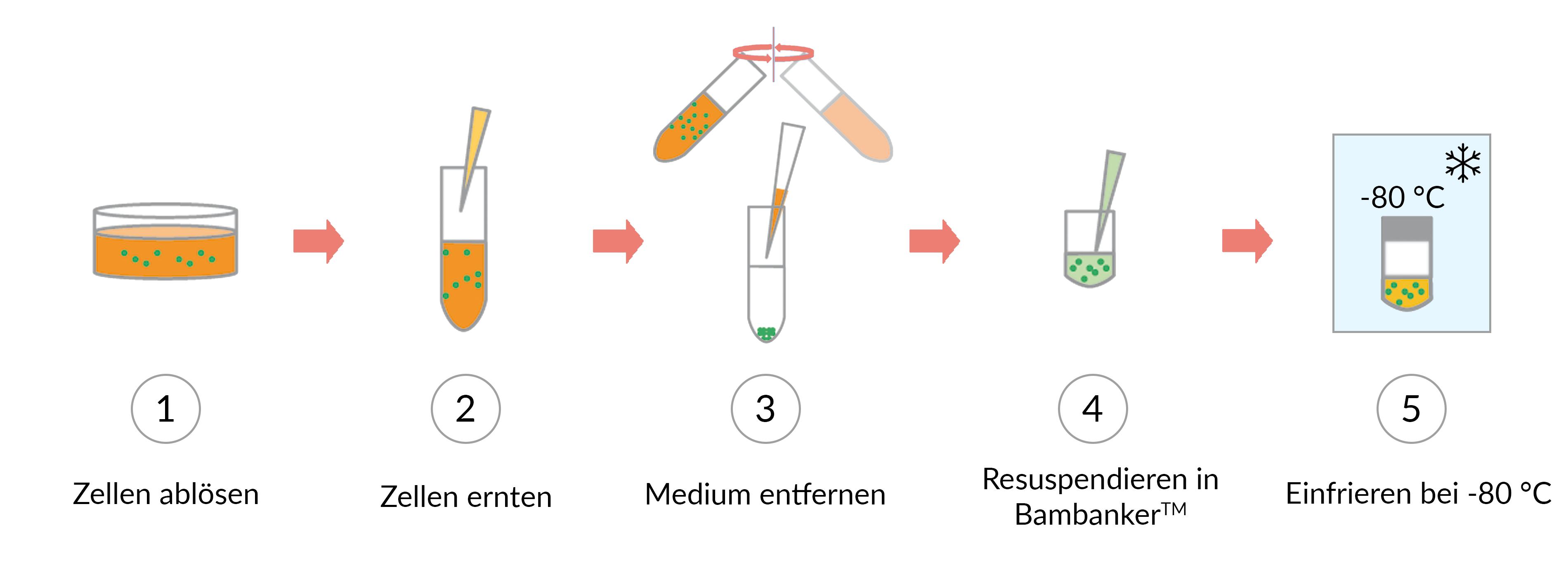Bambanker workflow horizontal_text 2021-05-11_deutsch